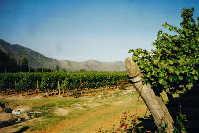 Wijngaard tegen het Andesgebergte aan in Chili